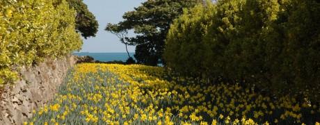 공고지의 봄 사진